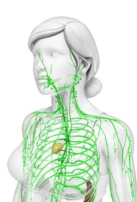 Lymfatické uzliny